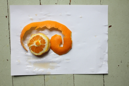 orange2-450-IMG_0382