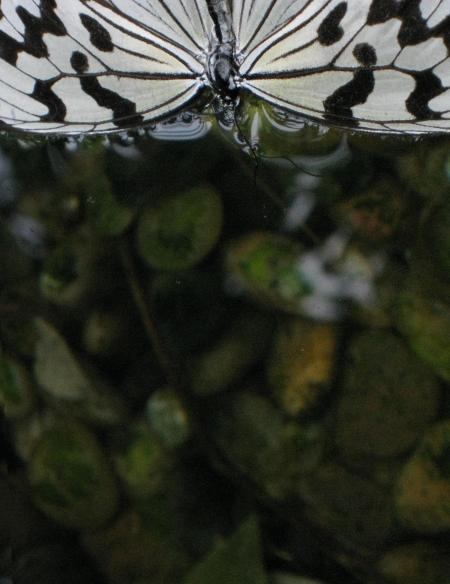 butterflyschmetterling2450hochkant.jpg