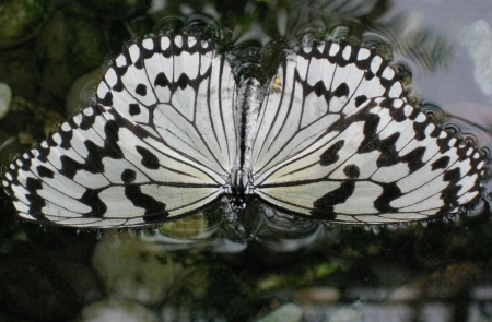 butterflyschmetterling3450.jpg